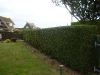 Hedge Trimming  (After)